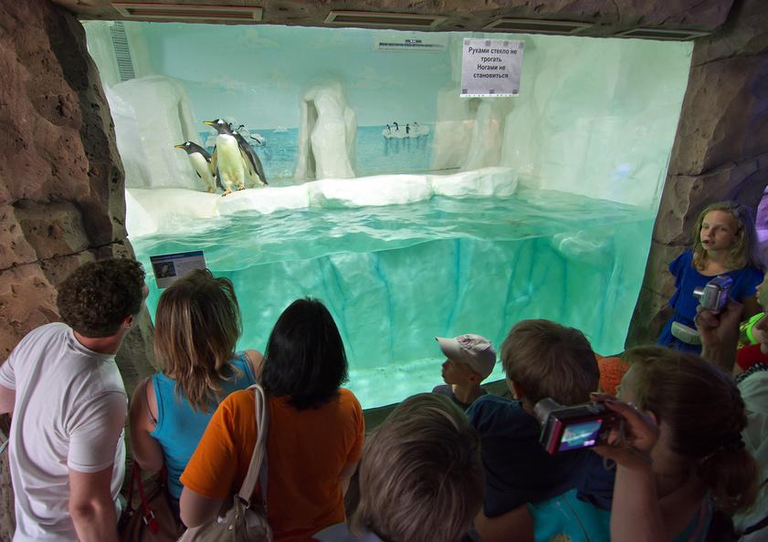 Вольер с пингвинами