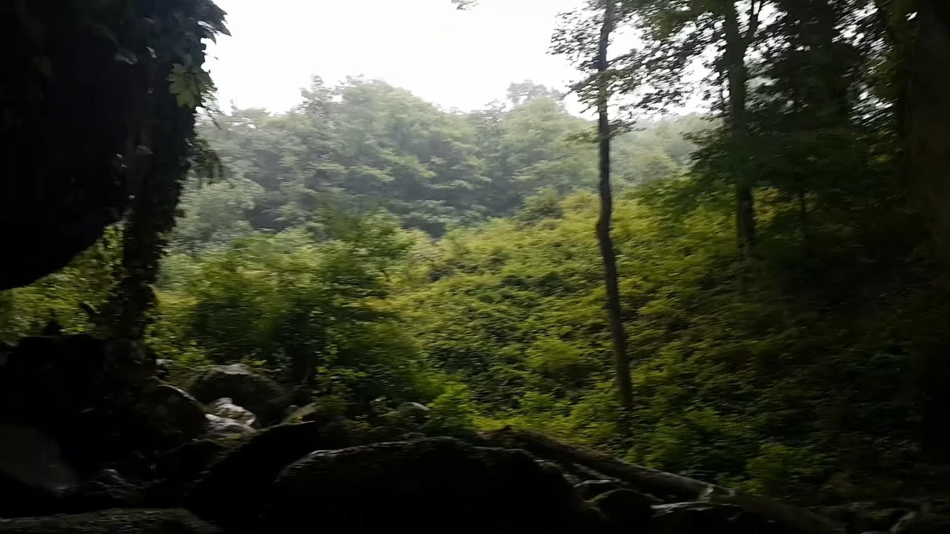 Лес в посёлке Волконка