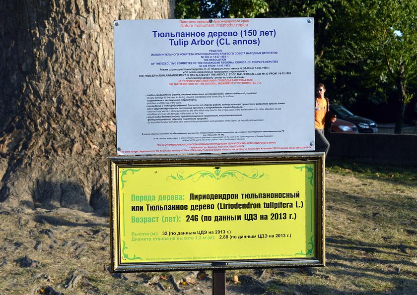 Информационная табличка о Тюльпановом дереве