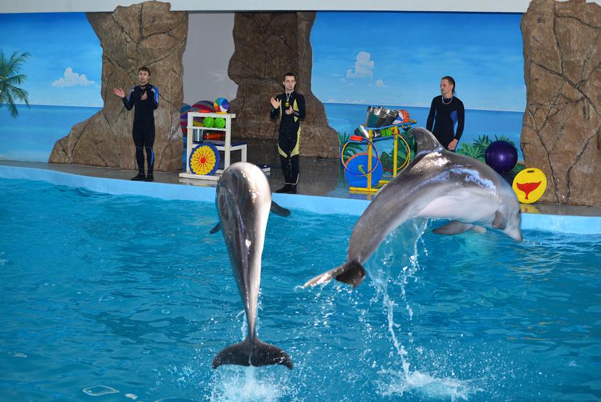 Шоу в Лазаревском дельфинарии